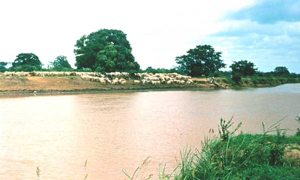 Река Сенегал в среднем течении.